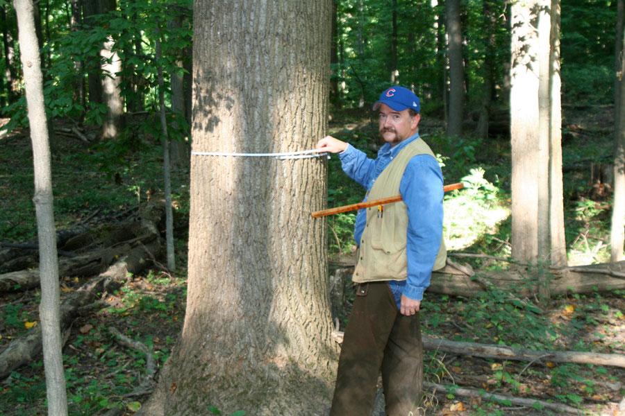 tree-measurement