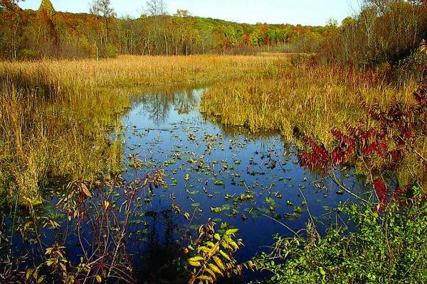 Land-Marsh